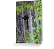 Baby bear in Tree Greeting Card