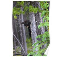 Baby bear in Tree Poster