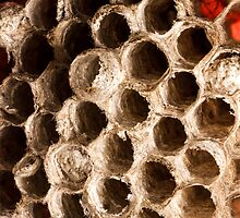 Macro Wall Art - Hive by HoskingInd