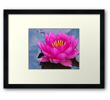 Brilliant Water Lily Framed Print