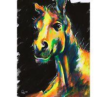 HORSE V.01 Photographic Print