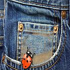 Blue Jeans Lady Bug by Delights
