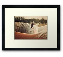 Quarter Horse Ears Framed Print