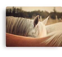 Quarter Horse Ears Canvas Print