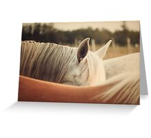 Quarter Horse Ears Greeting Card