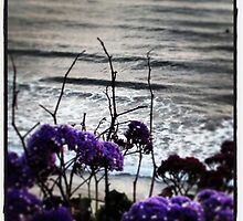 Spring Time in SoCal by photosbyamy