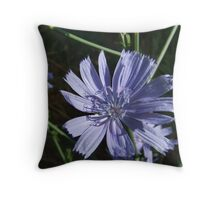 Morning Sun on Chicory Wildflower Throw Pillow