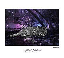 Feline Fairyland Photographic Print