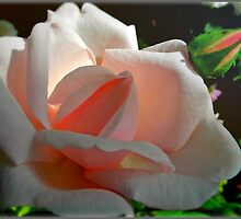 Miss Rose by KatarinaD