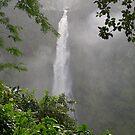 Akaka Falls by Michael Brewer