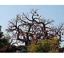 Freaky Tree Photographic Print