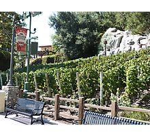 Vineyard California Photographic Print