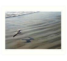 Flying over the Beach - Port Aransas Texas Art Print