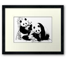 Giant Panda (Ailuropoda melanoleuca) (Panda family) Framed Print