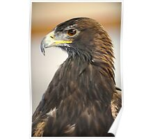 Golden Eagle in Respose Poster