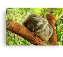 Sleeping Time Canvas Print