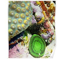 Emerald Green Artichoke Anemone on Coral Reef Wall Poster