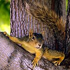 Animal - Squirrel watching from the Tree by Amy McDaniel