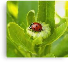 Macro Ladybug on Garden Plant Canvas Print