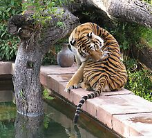 Just A Big Kitty Cat by Tanya Shockman