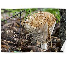 The Norma Jeane Shroom Poster