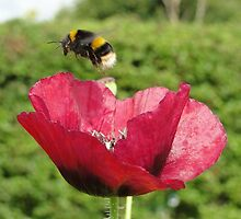 Go On, Buzz Off by Barrie Woodward