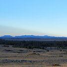 Bearpaw Mountain silhouette  by field9