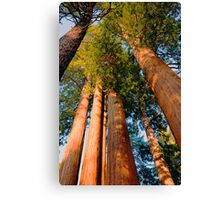 Three and One Canvas Print