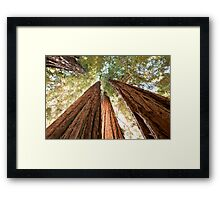Redwood Heaven Framed Print