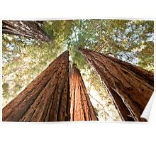 Redwood Heaven Poster