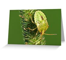 Brown Marmorated Stink Bug Nymph Greeting Card