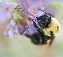 Pastel Bumble by Otto Danby II