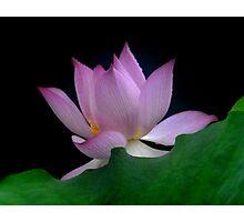 Dreamy Lotus (2) Photographic Print