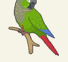 Pixel / 8-bit Parrot: Green-cheek Conure by Kadoodles