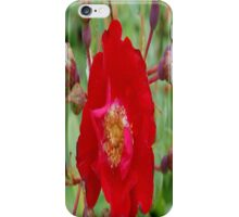 The Red Rose iPhone Case/Skin
