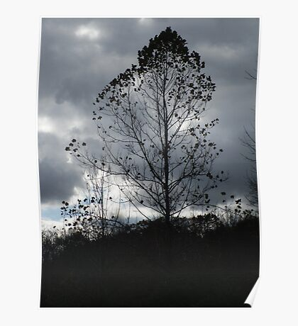 Silhouette Tree Poster