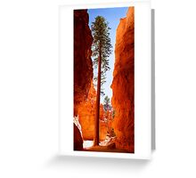 Pines in Bryce Canyon, Utah Greeting Card