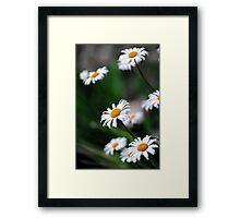 daisy select.. Framed Print