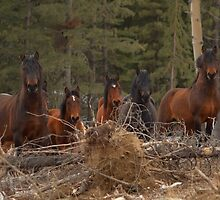 Wild Horses - Ghost Forest by JamesA1