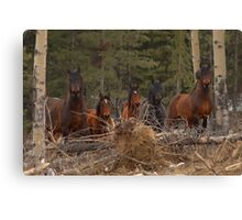 Wild Horses - Ghost Forest Canvas Print