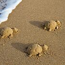 Three Baby Turtles - Wanda Beach - Sydney by Bryan Freeman