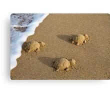 Three Baby Turtles - Wanda Beach - Sydney Canvas Print