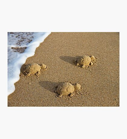 Three Baby Turtles - Wanda Beach - Sydney Photographic Print