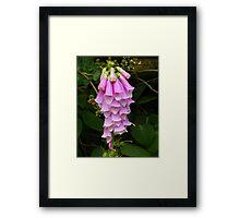 Foxglove in Pink Framed Print