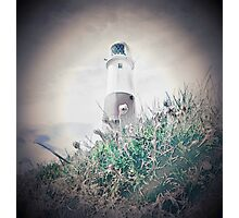 Portland Bill Flowers Photographic Print
