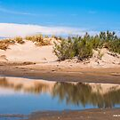 Reflected Dunes in the Camargue by Michael Brewer