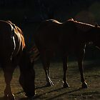 Equine in Silhouette by Betty  Town Duncan