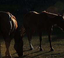 Equine in Silhouette by © Betty E Duncan ~ Blue Mountain Blessings Photography
