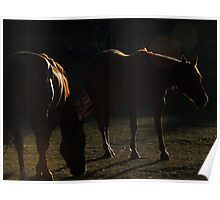 Equine in Silhouette Poster