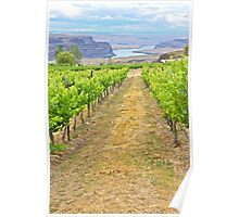 Columbia River through the Vines, Washington State Poster